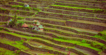 blur  in  philippines  terrace field for coultivation of rice  from banaue