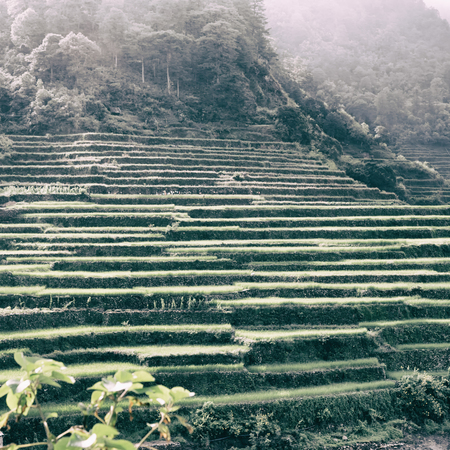 blur  in  Philippines  terrace field for cultivation of rice  from banaue