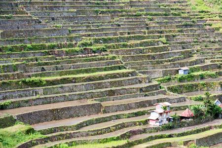 Sfocatura Nel Campo Della Terrazza Della Filippine Per La ...