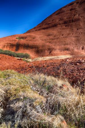 olgas: in  australia the outback canyon and the dead tree near  mountain in the nature