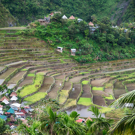 blur  in  philippines  terrace field for coultivation of rice  from banaue site