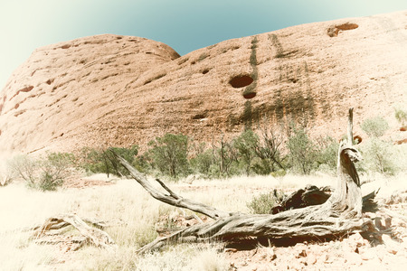 olgas: in  australia the outback canyon and   the   tree near  mountain in the nature Stock Photo