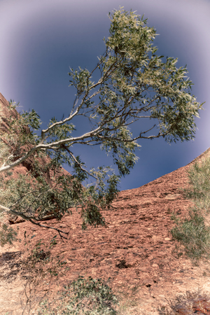 olgas: in  australia the outback canyon and  near  mountain in the nature Stock Photo
