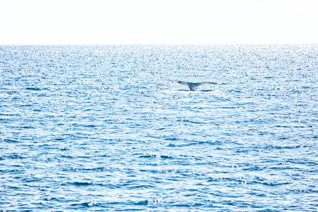 A free whale in the ocean like concept of freedom Stock Photo