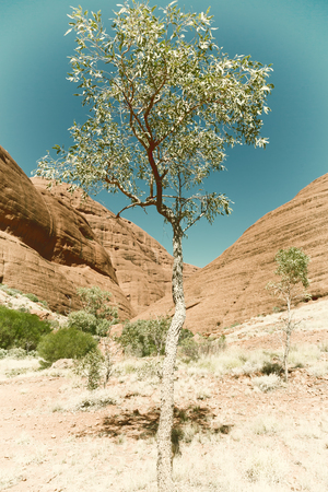 olgas: in australia, the outback canyon and near mountain in the nature