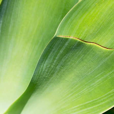 texture and close up of a leaf like abstract background
