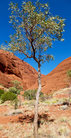 in  australia the outback canyon and  near  mountain in the nature Stock Photo