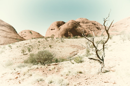 in  australia the outback canyon and   the   tree near  mountain in the nature Stock Photo