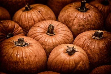 yellow texture of lots of pumpkin like decorative food Stock Photo