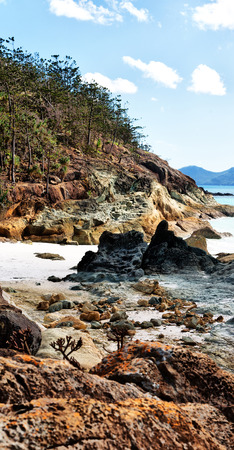 in  australia  the  beach of whitsunday island the tree and the rocks Stock Photo