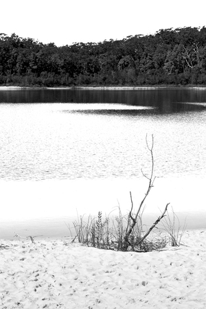 in  australia  lake mckenzie  tourism tree and relax in the paradise