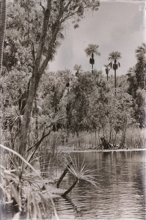 in australia mataranka  river the palm and the lake in the nature Stock Photo
