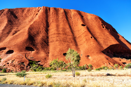 in  australia the outback canyon and   the   tree near  mountain in the  nature