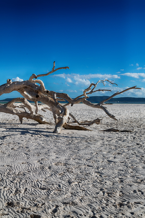 the tree and the beach in the paradise bay in whitsunday island, australia