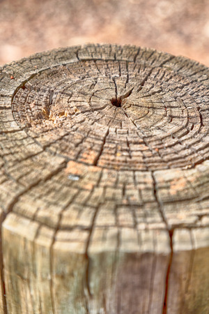 abstract texture of a surface tree like background grain Stock Photo