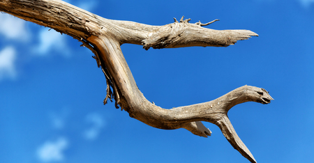 in  ethiopia africa  abstract texture background of an empty branch like a monster