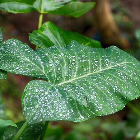 some rain drops on a leaf after the rain Stock Photo