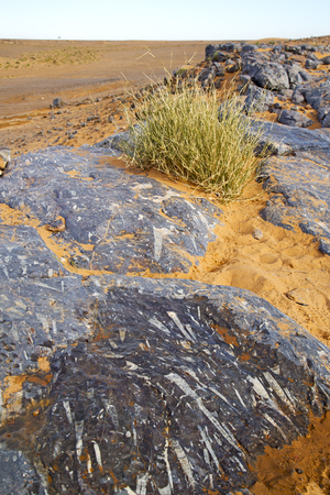 old fossil in  the desert of morocco sahara and rock  stone sky Banque d'images