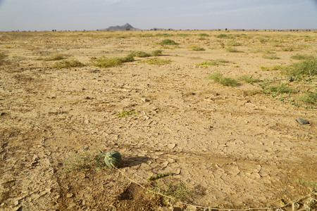 in sudan the mountain and the blur bush in the wildlife concept of nature and freedom