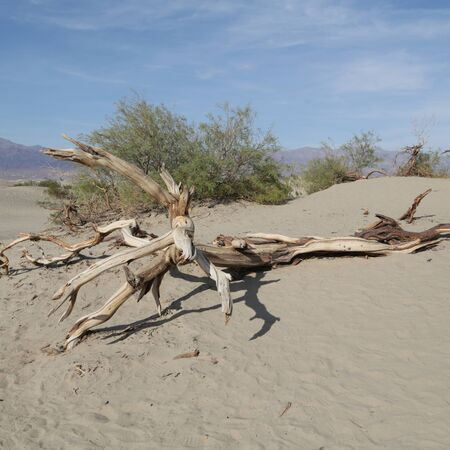 in USA  death valley  park the beauty of amazing nature tourist destination Reklamní fotografie