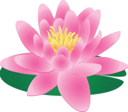 Single Pink Water Lily