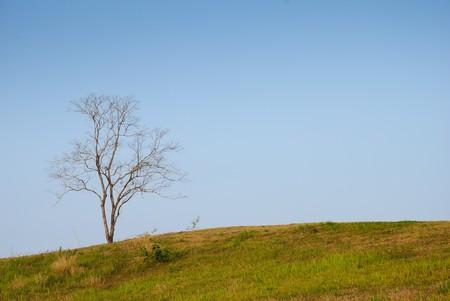 Dead loney tree on curve field photo
