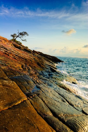 Lonely tree in cape at runrise, of koh samet island, Thailand