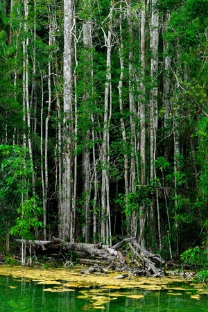 Landscape of mangrove forest, Krabi,Thailand Stock Photo - 8100245
