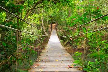 Bridge to the jungle,Khao Yai national park,Thailand Stock Photo - 8460462