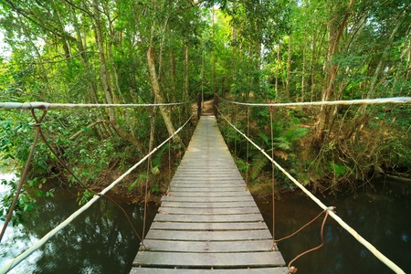 Bridge to the jungle,Khao Yai national park,Thailand Stock Photo - 8472475