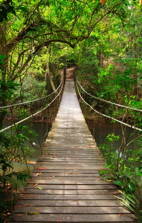 bridge over water: Bridge to the jungle,Khao Yai national park,Thailand
