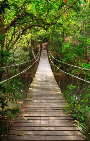 yai: Ponte nella giungla, parco nazionale di Khao Yai, Thailandia Archivio Fotografico