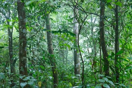 Tropical Rain forrest photo