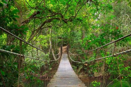 puente: Puente a la selva, el Parque Nacional de Khao Yai, Tailandia