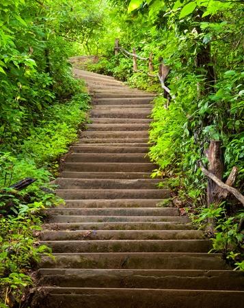 森林への階段 写真素材