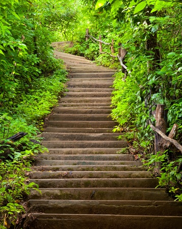 Stairway to forest photo