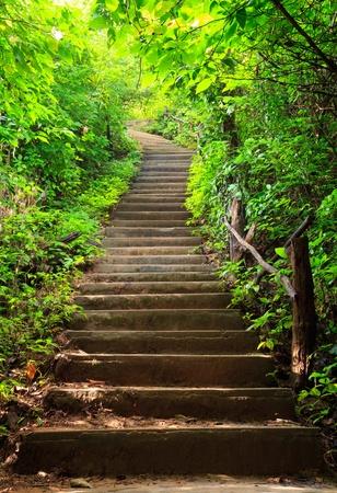 stair: Trap naar het bos Stockfoto