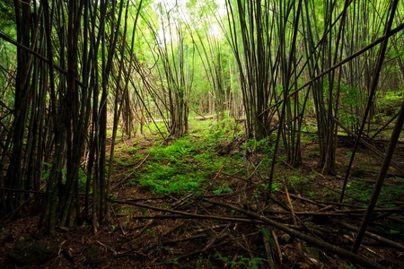 Bamboo forest Stock Photo - 10996220