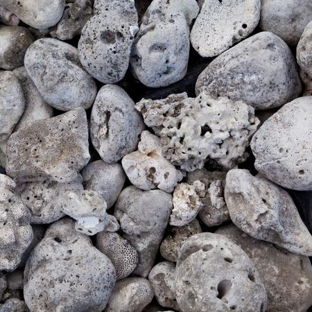 Group of coral bleach (dead) photo