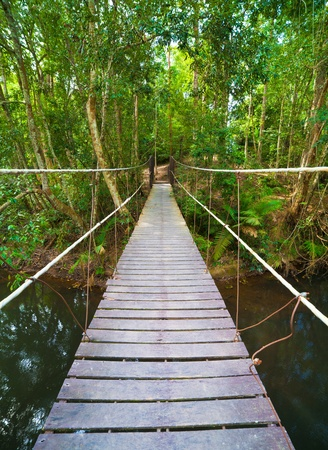 Bridge to the jungle,Khao Yai national park,Thailand Stock Photo - 12473652