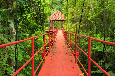 Bridge to the jungle,Trang, Southern of Thailand photo
