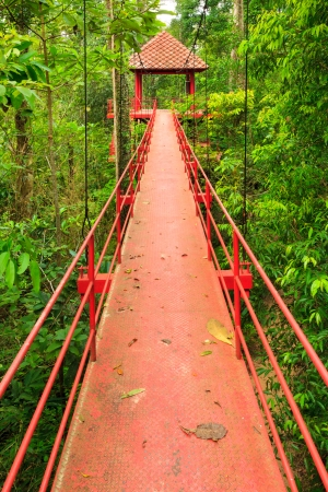 Bridge to the jungle,Trang, Southern of Thailand photo
