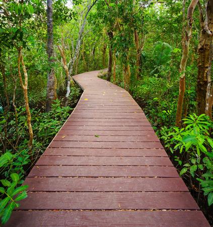 th�?¨: Puente de madera a la selva, el bosque de manglares Tha Pom, Krabi, Tailandia