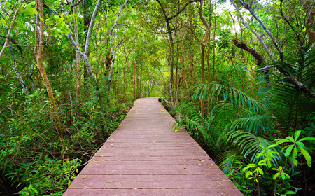 Wooden bridge to the jungle, Tha pom mangrove forest, Krabi,Thailand photo
