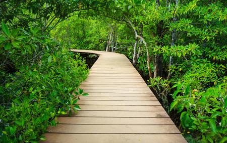 Wooden bridge to the jungle, Tha pom mangrove forest, Krabi,Thailand photo
