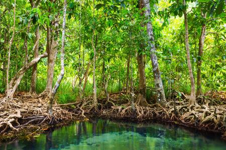 Tha Pom, the mangrove forest in Krabi, Thailand photo