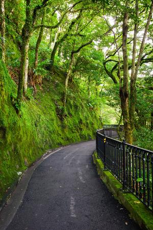 Road to forest, lugard road, Hongkong, China photo