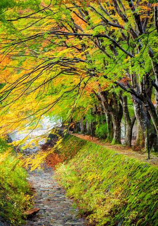 kawaguchi: Maple corridor, Kawaguchiko lake, Japan