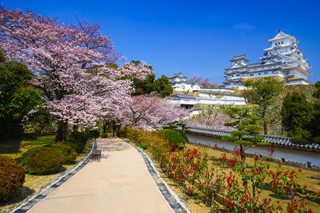 Himeji Castle in spring  cherry blossom season, Hyogo, Japan Banco de Imagens