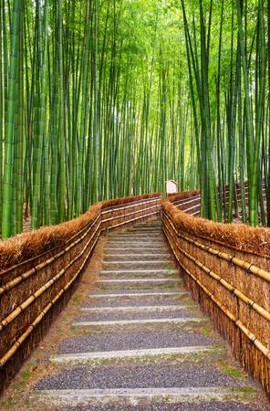 Pad naar bamboebos, Arashiyama, Kyoto, Japan Stockfoto